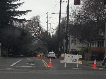Tree on Fremont. courtesy @MikeKATU
