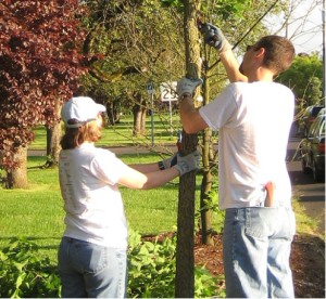 Tree Pruning Workshop