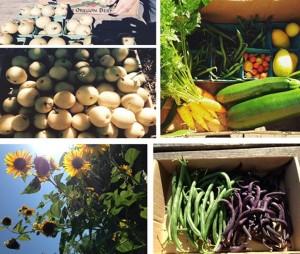 Harvest from Garlington Wellness Garden