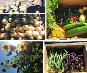 Harvest from Garlington Wellness Garden