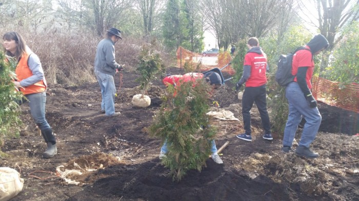 Tree planting in the Native Grove